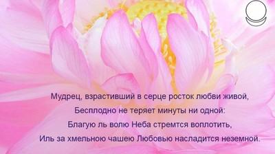 Мотиватор. Мудрец, взрастивший в сердце росток любви живой,